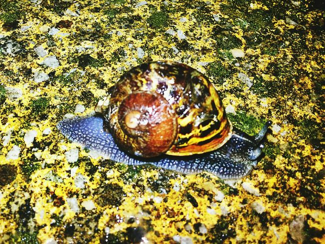 Animal Themes Wild Wildlife Nature Beauty In Nature Outdoors No People Close-up Creepy Crawly Snail🐌 Mollusks Trail Walking Photography Flowers And Insects Pond Life Water Leaves And Rain Drops Rainy Season Surfaces And Textures Tiled Floor Mosaic Macro Photography Shell Animal Photography