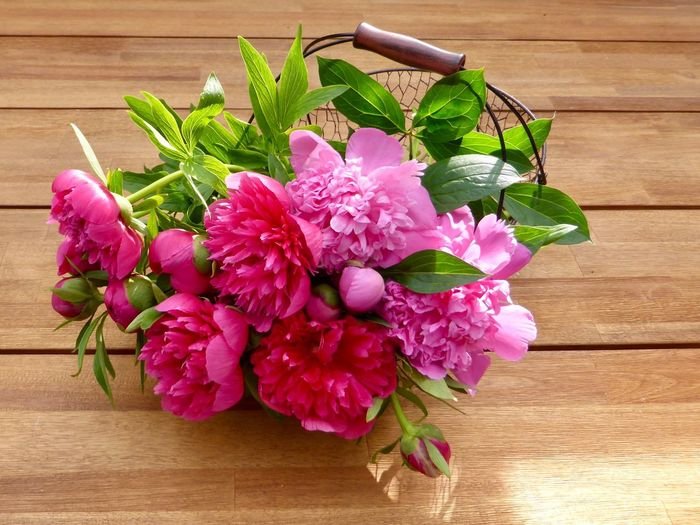 Basket with pink Peonies Still Life Peonies In Bloom Peonies Bloom Pink Flower Flowering Plant Plant Freshness Pink Color Table Beauty In Nature Petal Leaf Flower Head High Angle View Close-up