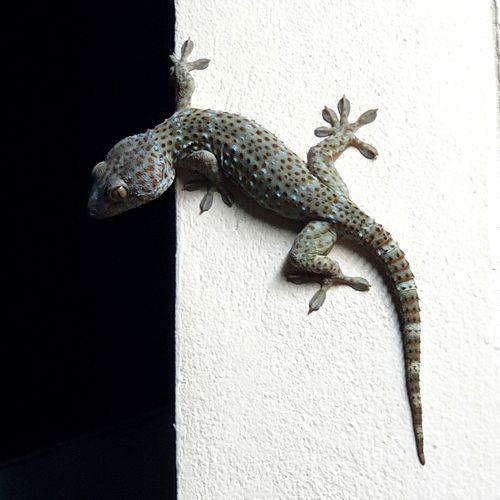 Iguana Reptile Tail Climbing Full Length Chameleon Lizard Close-up