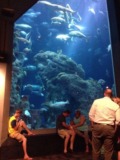 South Carolina Aquarium Hello World Learning Exploring Fish