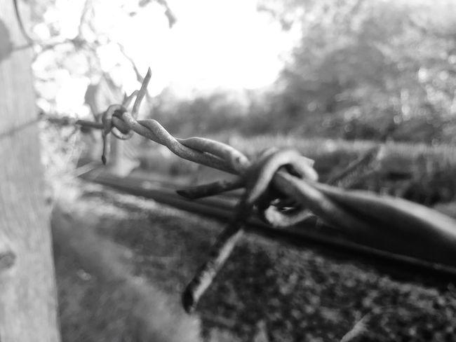Barbed Wire Railwaylines