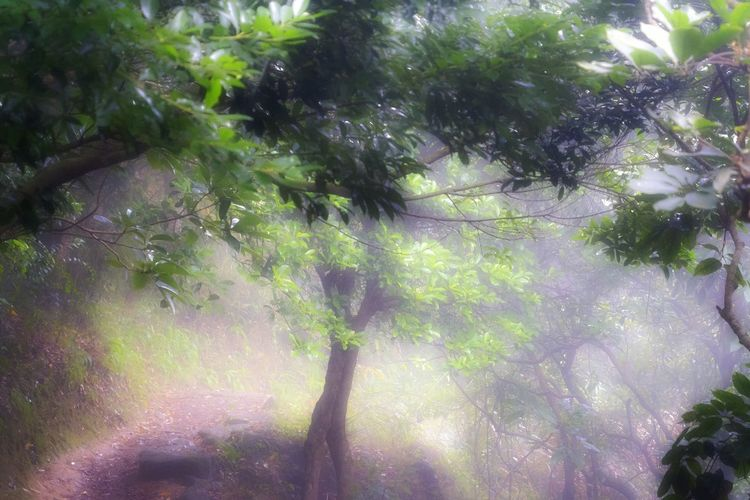 Wilderness Detail Tranquil Scene Getting Inspired Getting Creative Forest Foggy Weather Mountain Trails EyeEm Best Shots EyeEm Nature Lover My Unique Style Exceptional Photography Artistic Expression Hellow World Check This Out 😊 EyeEm Gallery Branch Full Frame Tranquility Focus On Foreground Beauty In Nature Tree