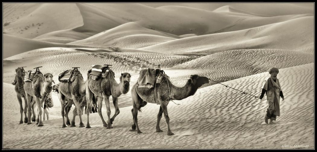 Deserts Around The World Hello World Blanco & Negro  Blackandwhite Photography Taking Photos Popular Photos Landscape_photography Black & White Blackandwhite