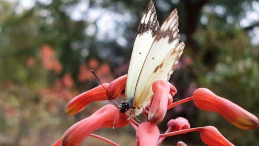 Original My Photography Beautiful Butterfly Flower Firstphotographevertaken Loving Nature Loveing Life Follow4follow
