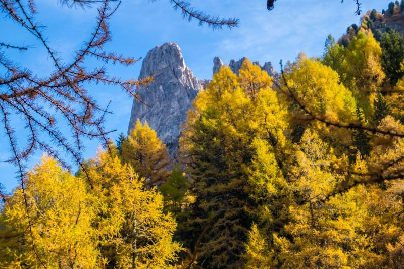 col of lien,valais,swiss Tree Plant Autumn Beauty In Nature Change Nature Sky Forest Scenics - Nature No People Tranquility Growth Day Tranquil Scene Yellow Land Branch Outdoors Non-urban Scene Low Angle View WoodLand Autumn Collection Pine Tree Coniferous Tree