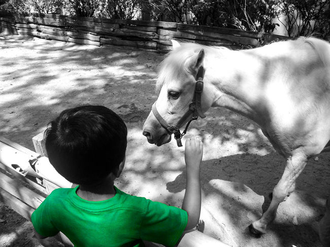 Close encounter Horse Horse Life Horse Photography  Zoo Animals  Zoophotography Petting Zoo Affection Horse <3 Green Green Color Trinidad And Tobago Child Blackandwhite Photography Dualtone