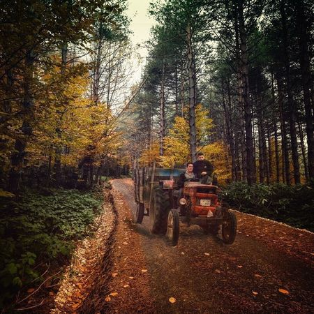 Tree Nature Forest Autumn Transportation Beauty In Nature Outdoors Day Scenics No People Tractor
