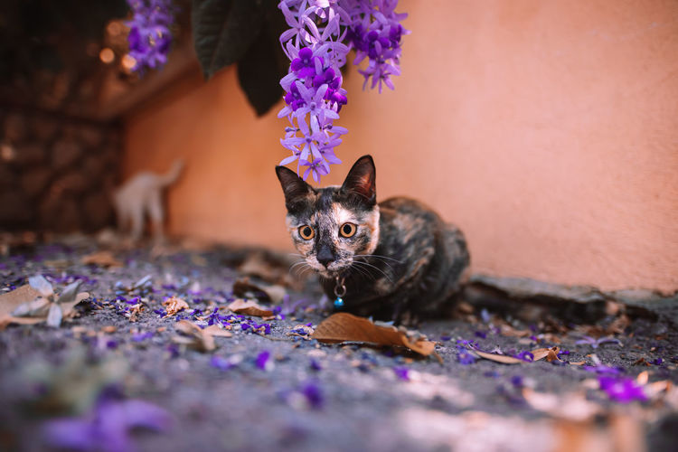 Portrait of a cat on flower