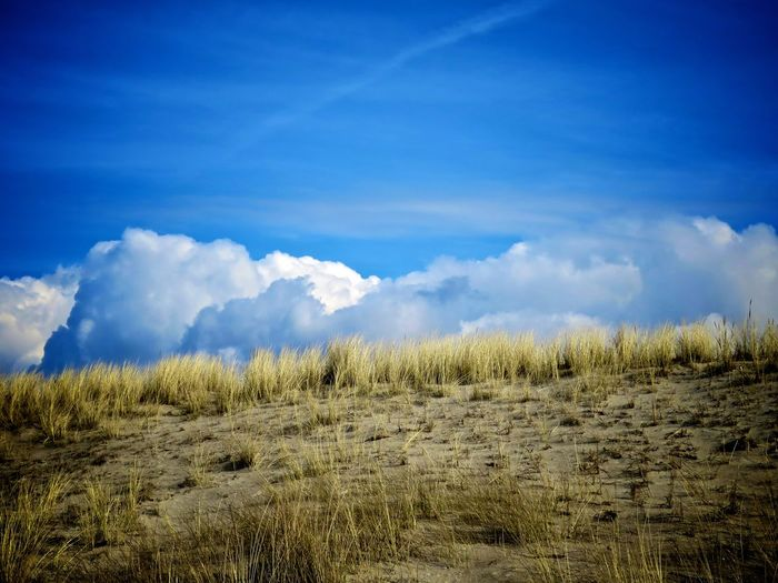 Beauty In Nature Blue Cloud - Sky Day Environment Field Grass Growth Land Landscape Nature No People Non-urban Scene Outdoors Plant Remote Scenics - Nature Sky Tranquil Scene Tranquility Summer Exploratorium