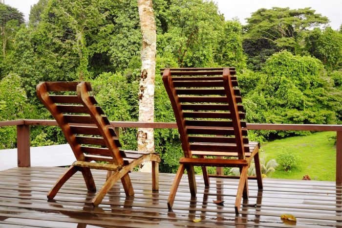 Relax in Costa Rica Selva Jungle Seat Wood - Material Plant Chair No People Nature Green Color Park