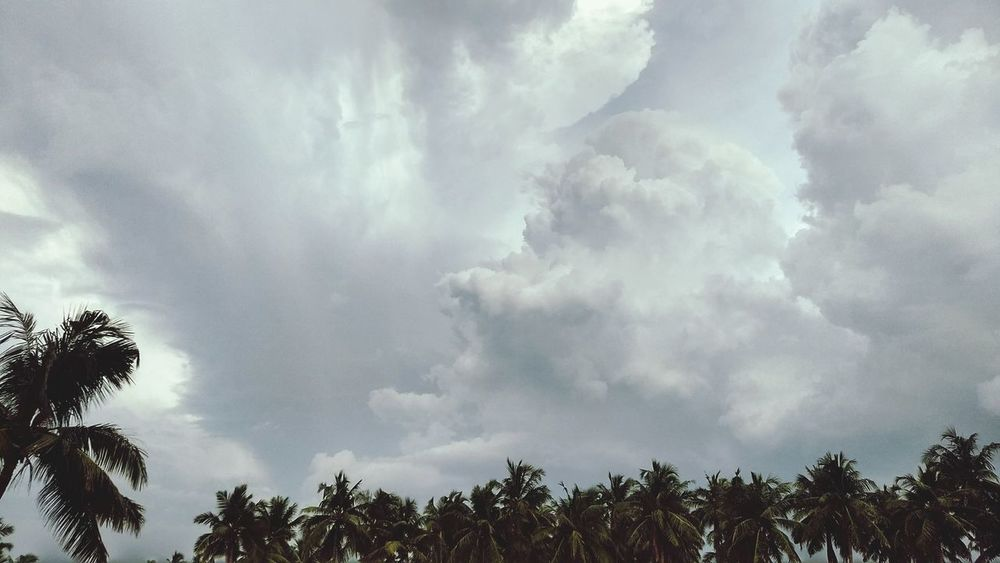 Mother nature Cloud - Sky Storm Cloud Nature Thunderstorm Dramatic Sky Sky Forest Hurricane - Storm Outdoors No People Cyclone Day Beauty In Nature Pinaceae Tree Power In Nature