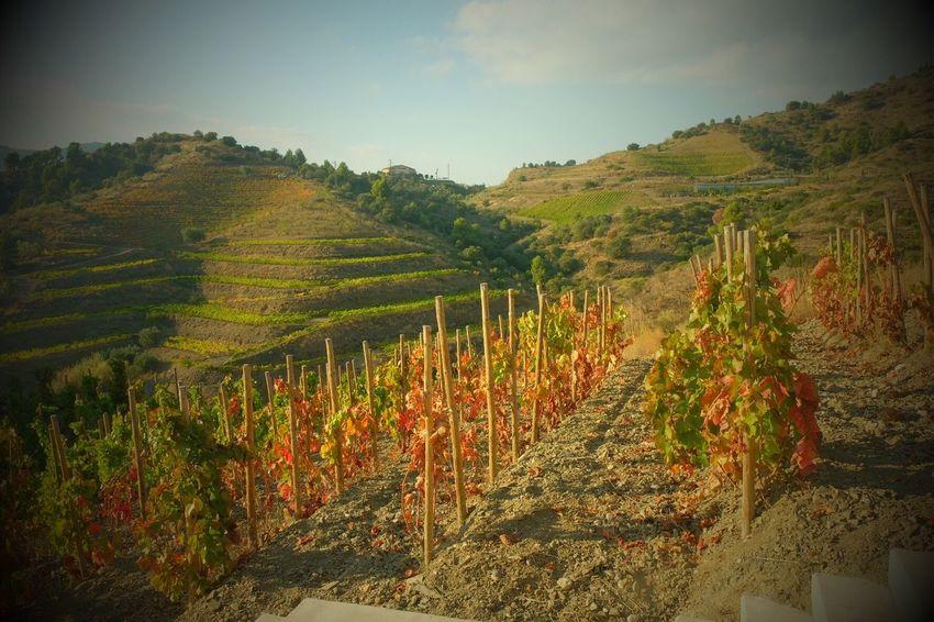 Landscape Wine Tranquil Scene Gratallops Vi Vino Eyem Best Shots Colours Wineyard Wine Moments Wine Country Tarragona Beauty In Nature Rural Scene Outdoors Fuji FUJIFILM X-T1 Grapes Tarragonaturisme Enoturismo Catalunya Catalonia