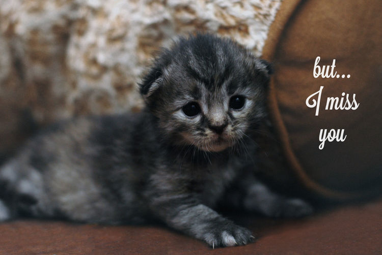 Pick up line with adorable, heart melting looking kitten as background image - but...I miss you Adorable Animal Themes Blackboard  Cat Cat Lovers Cats Of EyeEm Close-up Communication Cute Cute Cats Day Domestic Animals Domestic Cat Indoors  Looking At Camera Mammal Meme Miss You No People One Animal Pets Pickup Pickuplines Portrait Text