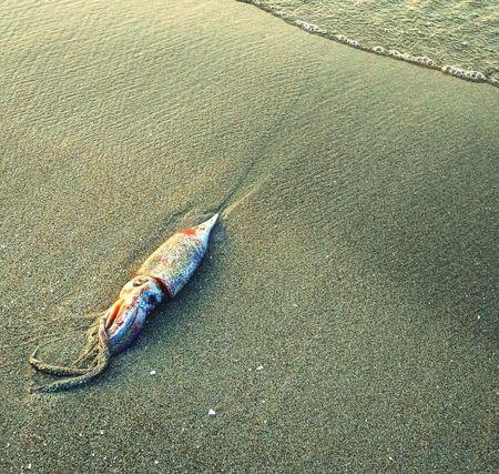 Dead and still beautiful calmar Nature Calmar Beach Sand Shore Sea Beauty In Nature Artphotography Xaimimi4c Laganas Greece, Zakynthos Fresh On Eyeem