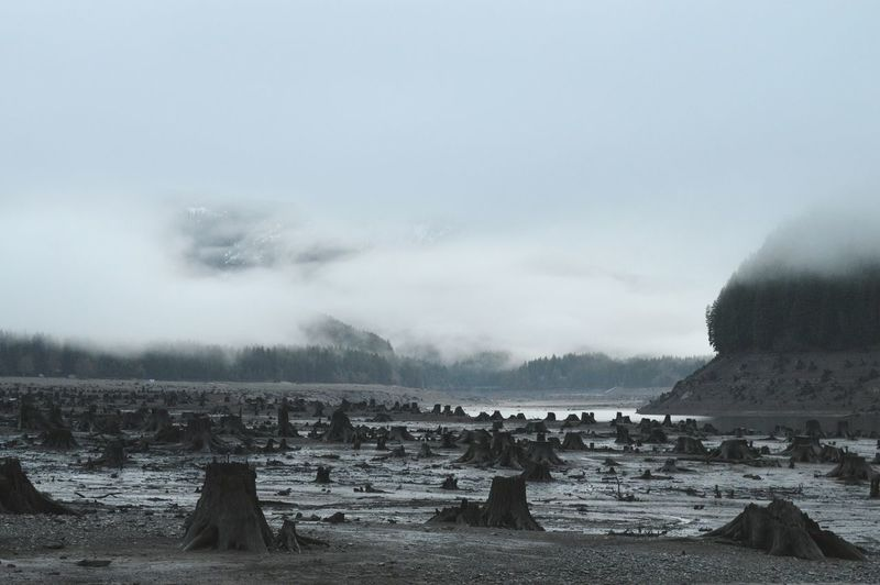 Tree Stumps On Field During Foggy Weather