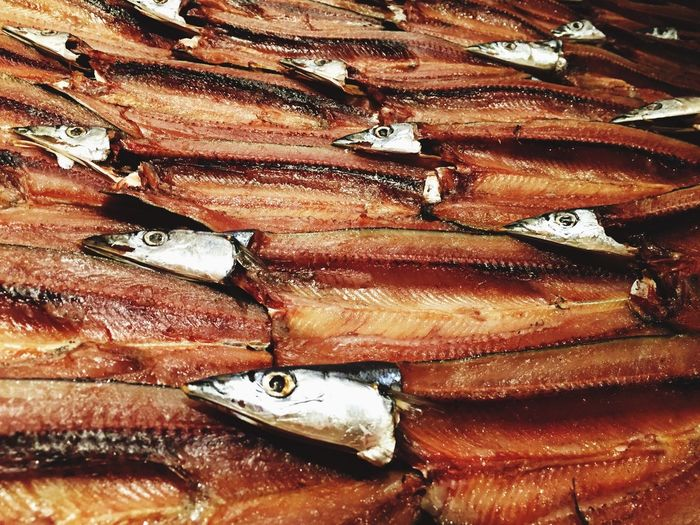Fish DEAD FISH