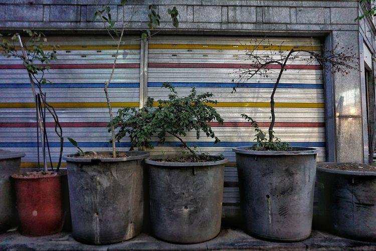 Flowerpots Life