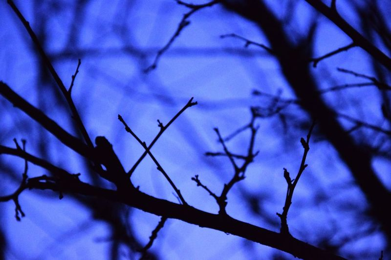 Sometimes we should cherish the lesser part of life given to us. :) Love Experimental Sunset Love ♥ Experimental Photography Blue Blue Sky Branches Branches And Sky Branch Of A Tree Branch Branches And Shadow Kathmandu Nepal Kathmandu Kathmandu, Nepal Nepal Life Lifeisbeautiful Life Is Beautiful Cherish The Moment CherishEveryMoment Cherish