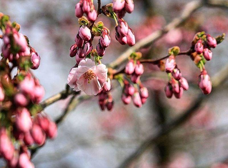 Blossom Pinkandpretty Princess Alnarp InTheGarden Spring Lovelife Beauty Happiness Picoftheday Photo Picofthemoment