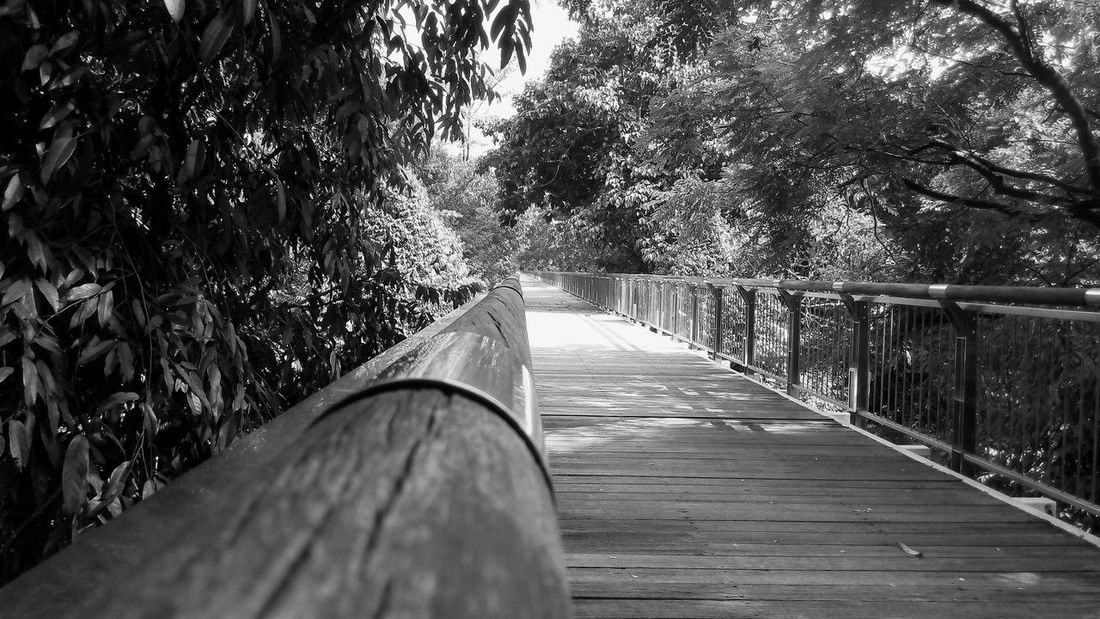 Journey Canopy Walk Never Ending Nature Monochrome My Best Photo 2016 Bridge Showcase March Fresh From My Point Of View Check This Out Lines Summer Summer Views Landscape With Whitewall Here Belongs To Me