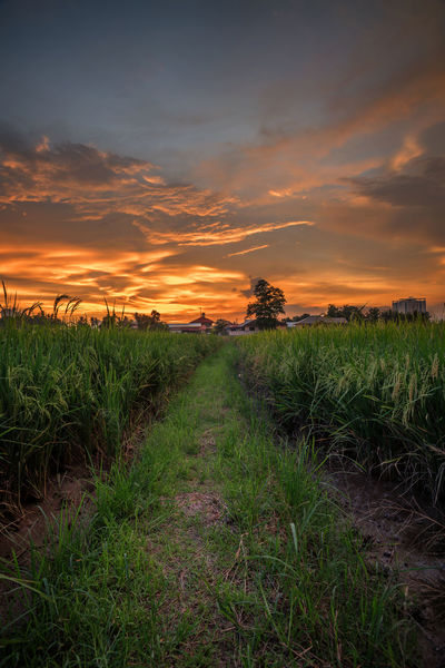 burning in sky at penang malaysia Landscape Penang Malaysia TourismMalaysia Nikon D750 Georgetown Nature Travel ASIA Scenery Paddy Field Nature Tourism EyeEmNewHere