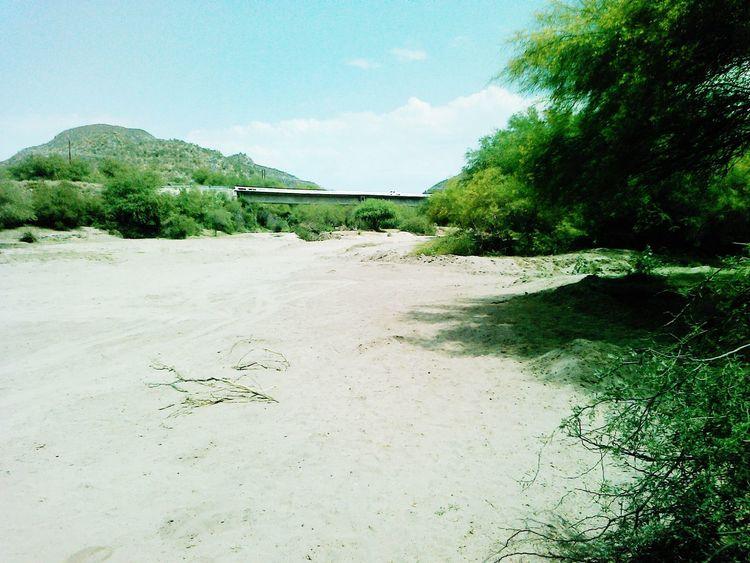 En el gavilán sonora México Nature Mexico Sonora