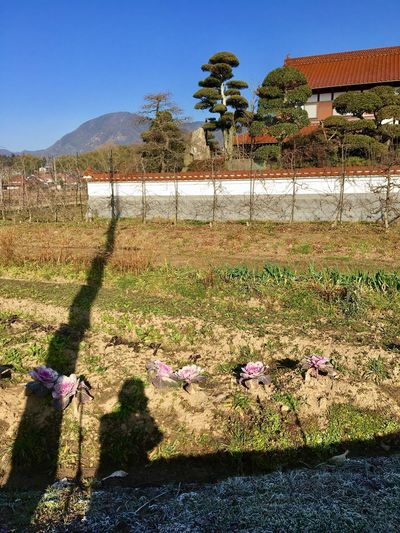 Traditional Buildings in Japan : A Farmhouse in the Countryside. Clear Sky Sunlight Outdoors Architecture Building Exterior Sky Grass Tree Day Real People Nature Growth mountain silhouette. Taken in Higashi-Hiroshima , Japan on Jan. 28, 2017. (Submitted on March 21, 2017)