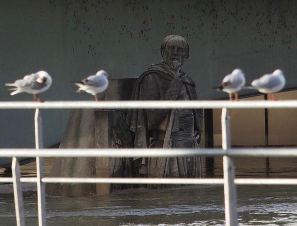 Crue 2018 Paris Flood Seine Zouave De Paris Bird Animal Themes Animals In The Wild Water Perching Seagull