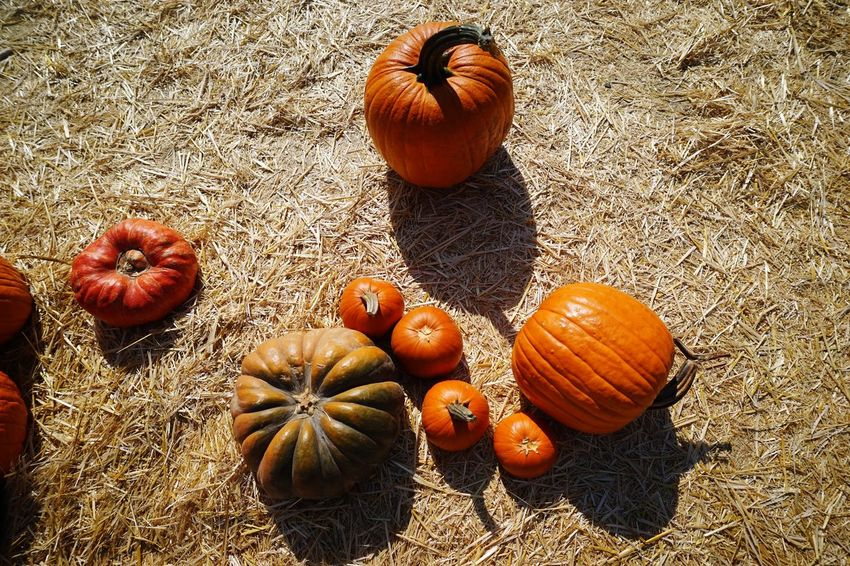 Halloween pumpkins Halloween Pumpkin Food Food And Drink Healthy Eating Fruit Freshness High Angle View Wellbeing