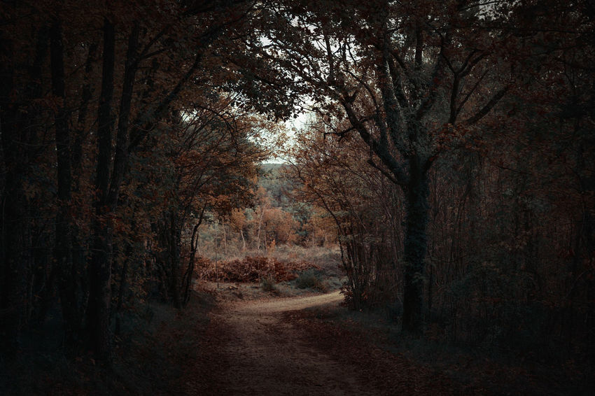 Tree Plant Forest Land The Way Forward Direction Tranquility Nature Beauty In Nature Footpath Road WoodLand Dirt Road Diminishing Perspective Tranquil Scene Dirt No People Autumn Non-urban Scene Growth Treelined Outdoors Tree Canopy