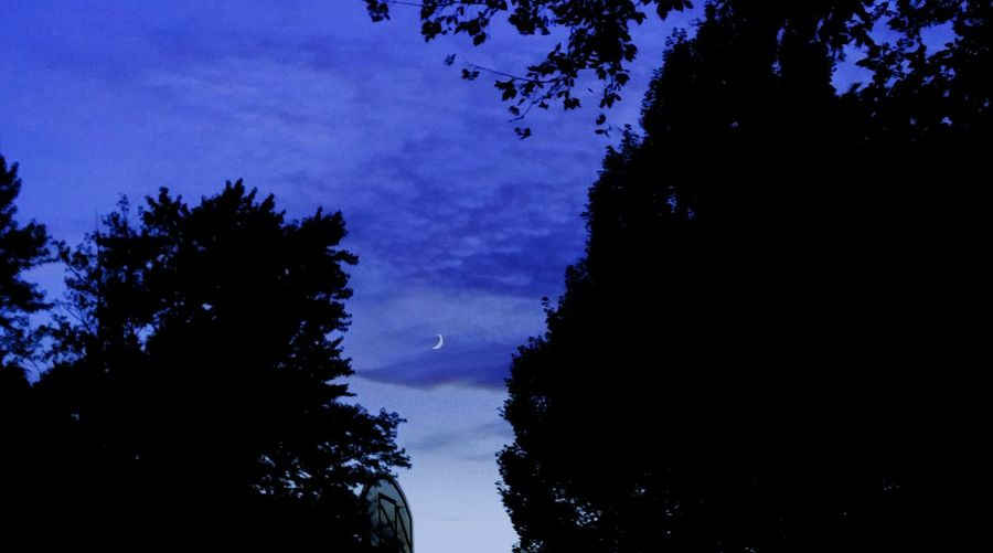 Tree Blue Silhouette Dark Treetop Cloud - Sky Moon Shots Illinois Summer Tranquility Solitude No People