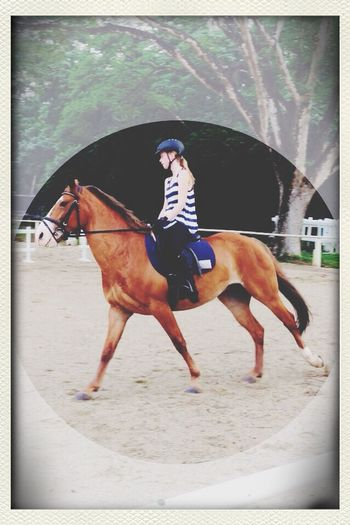 I Love Horses Best Horse In Love Harry???⭐️✨???