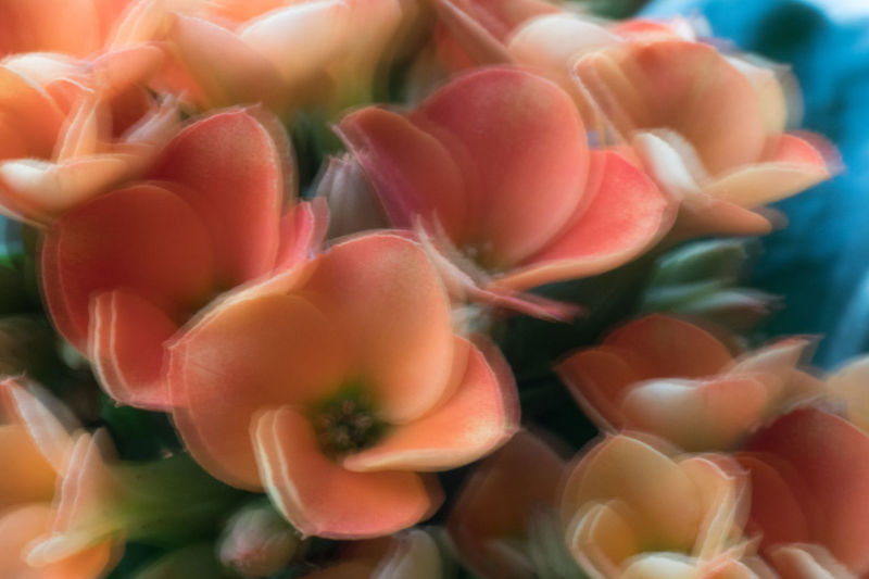 If you want to sell glasses, let the costumers look at this photo 😊 Beauty In Nature Blurry By Mistake Close-up Day Flower Flower Head Food Fragility Freshness Gh5 Nature No People Outdoors