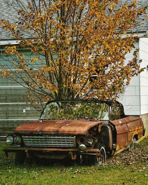 Autumn Leaves Tree No People Change Season  Outdoors Nature Plant Branch Beauty In Nature Decay Rust Rusty Deterioration Deteriorated Dilapidated Overgrown Passenger Overtaken Autumn Autumn Colors Autumn Leaves Autumn In Overdrive Abandoned