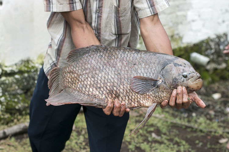 Midsection of man holding fish