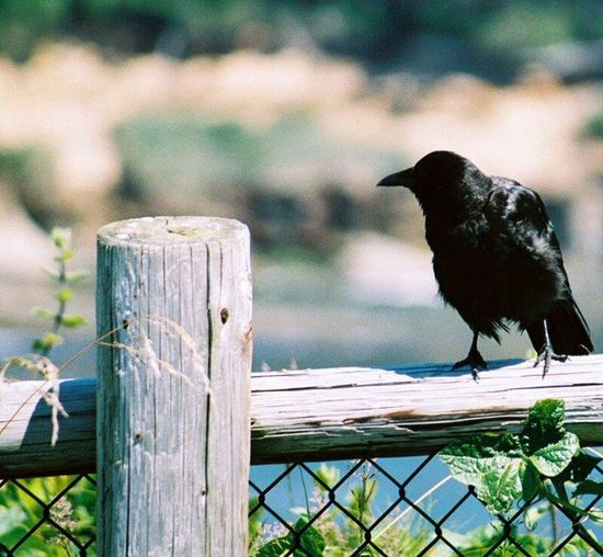 Close-up of bird perching on wooden wall