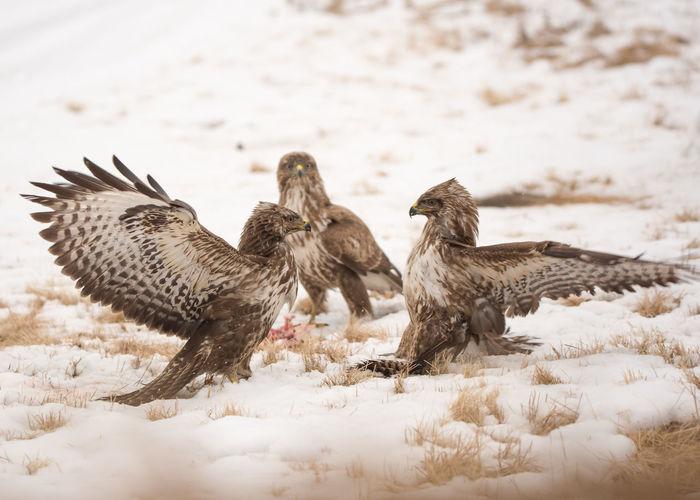 Close-up of birds fighting