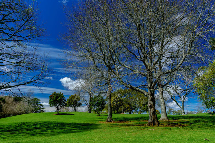 Cornwall Park. Auckland, New Zealand. Auckland Beauty In Nature Blue Cloud Cornwallpark Day Field Grass Green Growth Idyllic Landscape Landscapes Nature Newzealand Non-urban Scene Outdoors Remote Scenics Sky The Essence Of Summer Tranquil Scene Tranquility Tree Showcase June