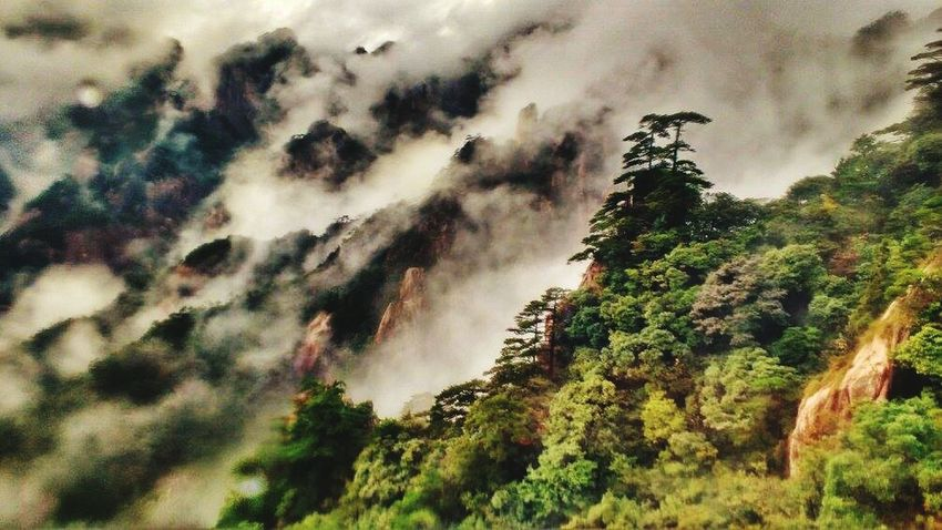 Nature Tree Beauty In Nature Mountain Tranquility Outdoors No People Forest Scenics Day Lush - Description Sky China Yellow Mountain