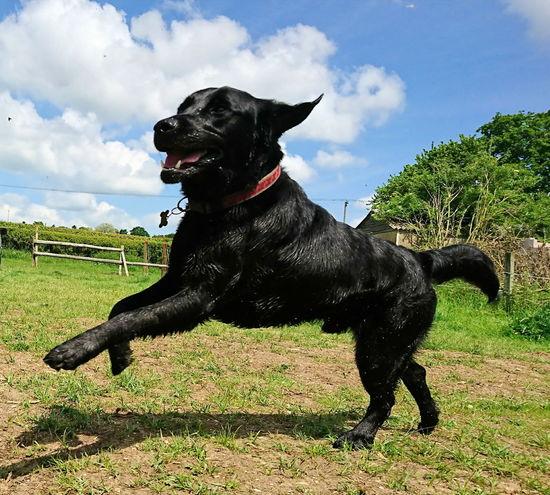 Dogsareawesome Domestic Animals Dogslife Dog Canine Photography Pets Dog Photography Dog Walking Dogs_of_instagram Doglovers Canine Love :) Dog❤ Dogs Of EyeEm DogLove Dog Love