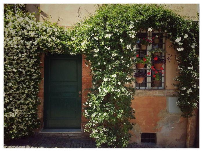 Door Bella Veduta Casa Flowers,Plants & Garden