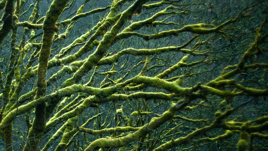 Green Color Full Frame Backgrounds No People Plant Close-up Day Nature Beauty In Nature Pattern Tree Indoors  Growth Branch Textured  Plant Part Textile Leaf Water