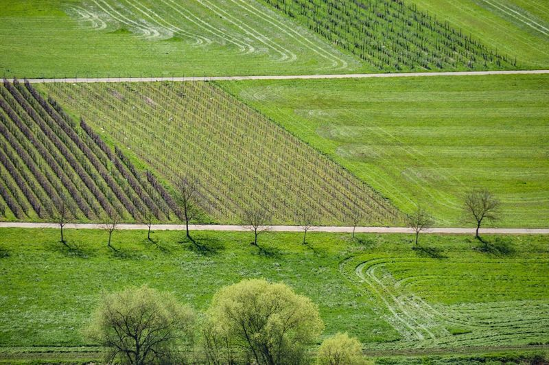 lines and patterns of vineyards as seen from afar Green Green Color Lines And Patterns Lines, Shapes And Curves Textures And Patterns Textures In Nature Vineyards In Summer Vineyards  Travel Photography Rural Scene Agriculture Field Farm Green Color Agricultural Field Farmland Cultivated Land Tranquil Scene Plantation Cultivated Countryside Calm The Great Outdoors - 2018 EyeEm Awards