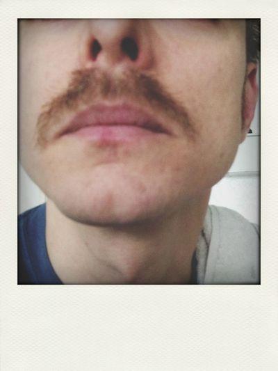 Mustache Hipster Shit  I Moustache You A Question Pornstache