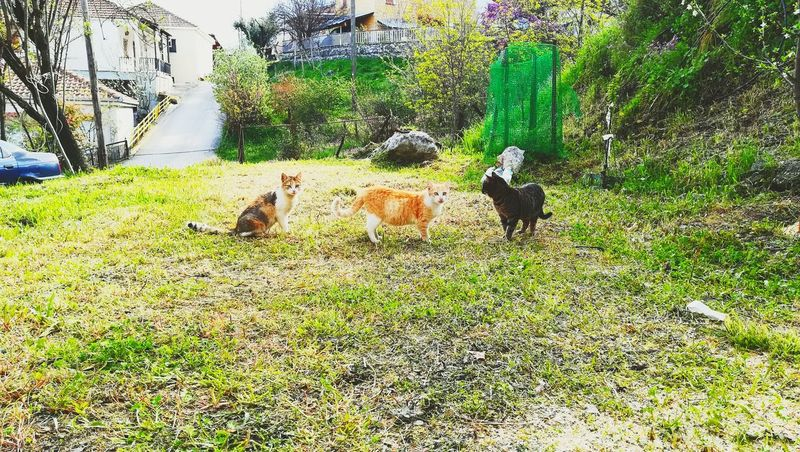 Animals In The Wild Cat Cats Cats Playing Three Cats Cats Photography Kittens Grass Green Color Nature Photography Nature Beauty LoveNature Naturelovers Greece