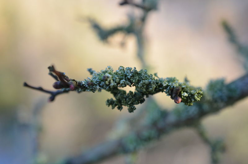 Lichen Macro Photography Beauty In Nature Close-up Day Flower Focus On Foreground Fragility Freshness Growth Lichen In Macro Lichen On A Tree Lichens On Tree Macro Nature No People Outdoors Plant Selective Focus Tree