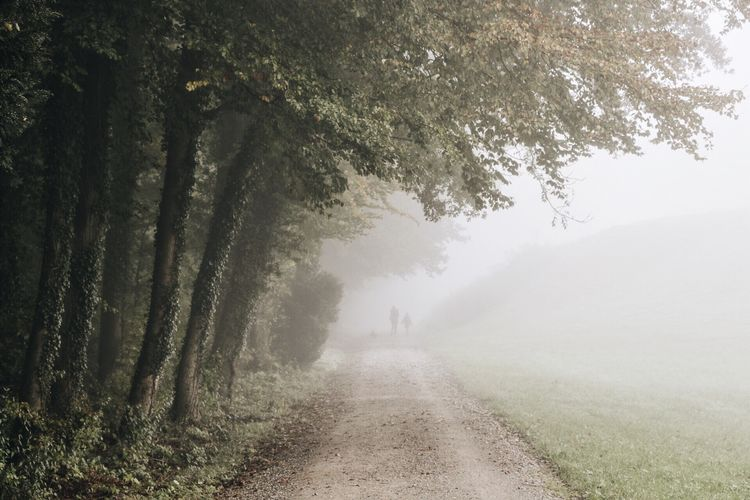 Narrow pathway along trees on landscape in foggy weather