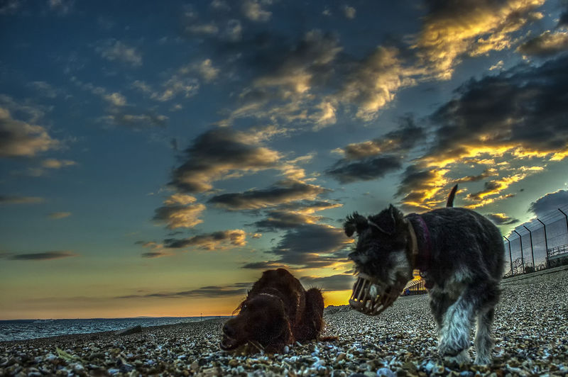 Still time to find something Eastney Hampshire  England Dogs Pets Domestic Animals Sunset Sea Clouds Beach Sunset Sunset Water Sea Sky Cloud - Sky