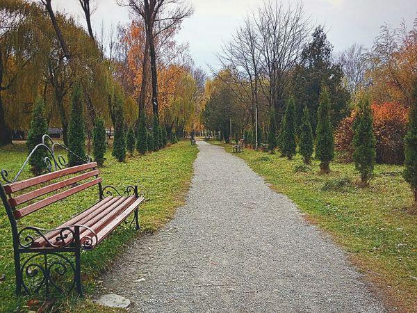 Ternopil Park Leaf Autumn Samsung Galaxy A3 Bench Path EyeEm Nature Lover EyeEm Best Shots Nature EyeEm Trees Ukraine Relaxing