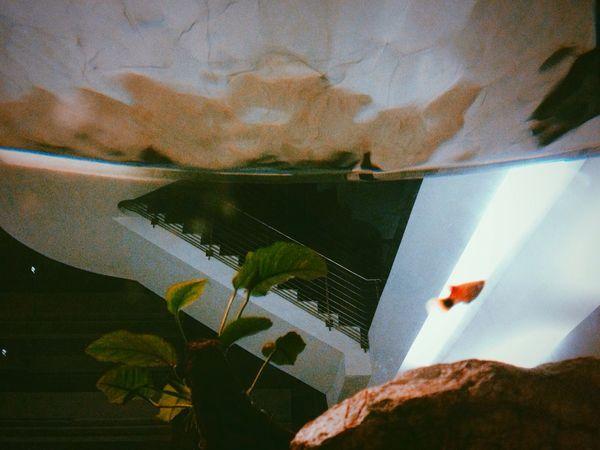 Hello World Fish Aquarium